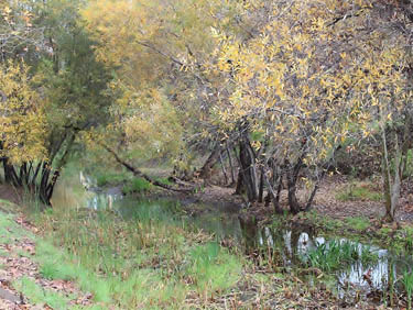 A stretch of Laguna Canyon Creek near the Food Pantry. Photo credit: Allan Schoenherr